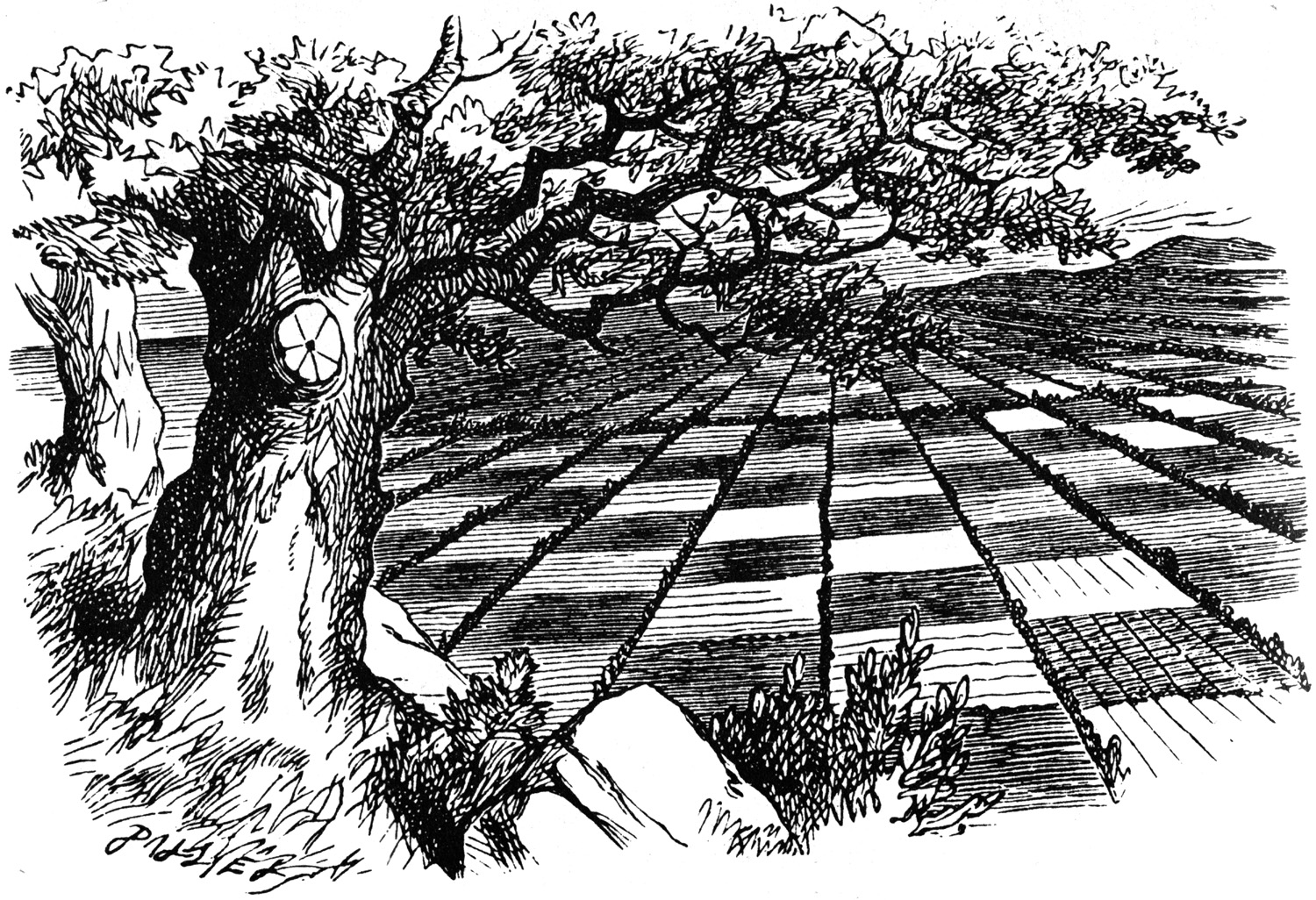 The chess field