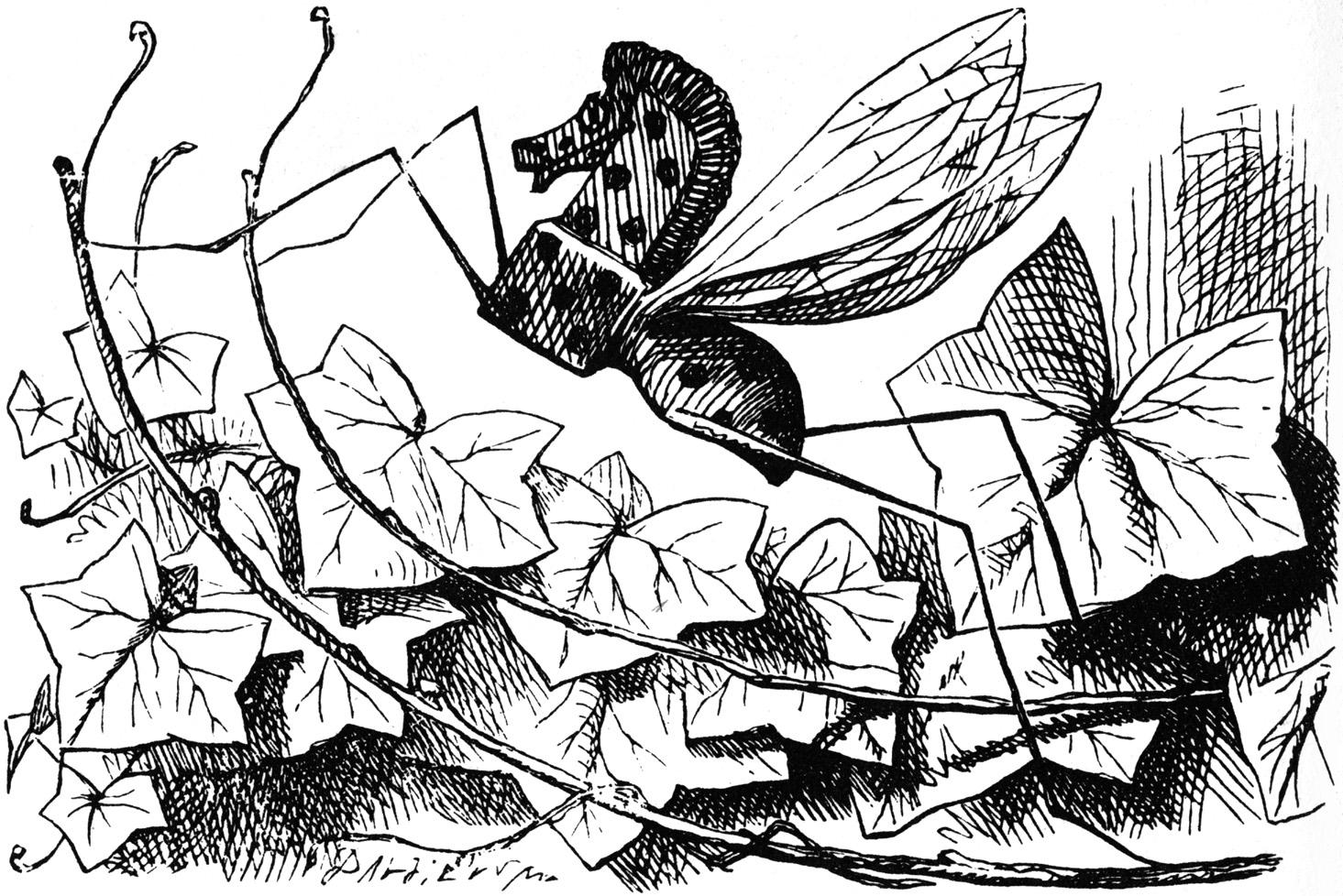 Rocking horse fly