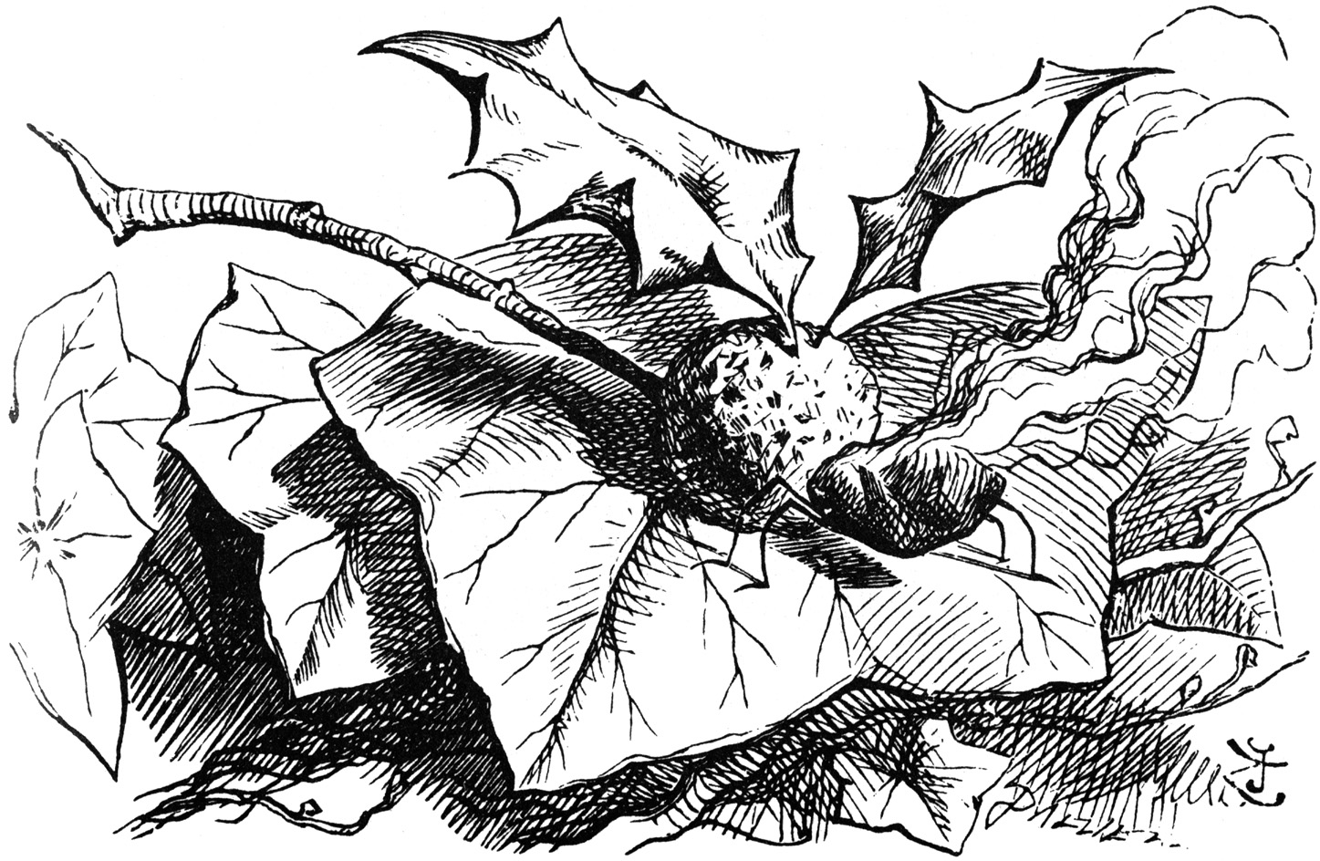 Snap dragon fly