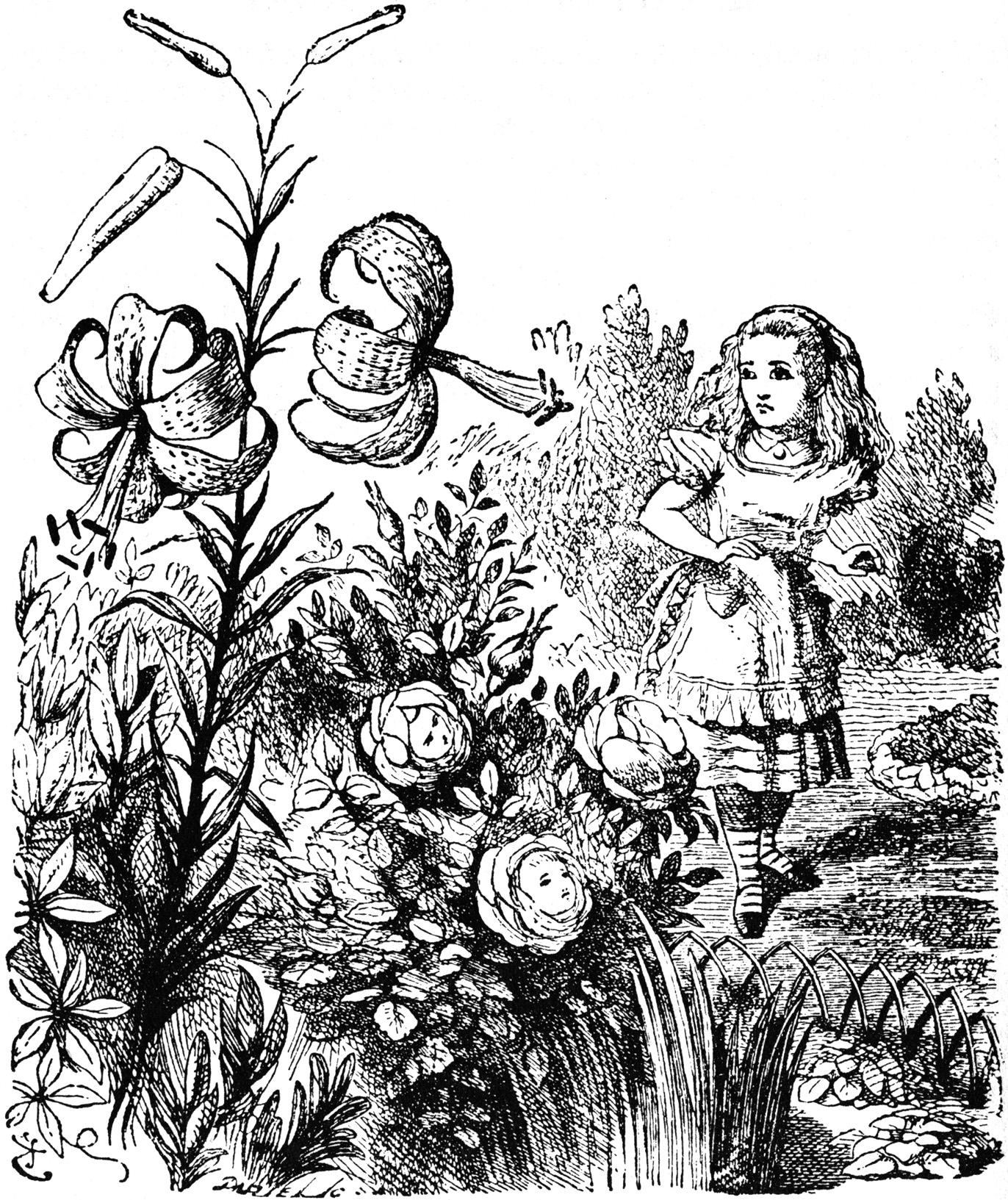 Alice meeting the flowers